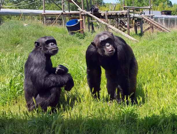 Luchando por el bienestar animal