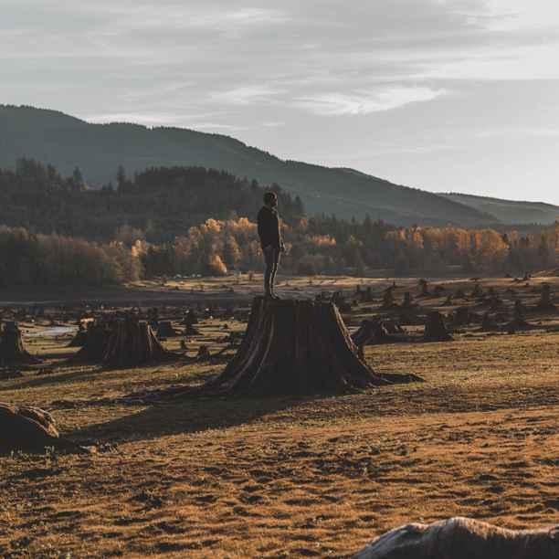 Deforestación, causas y consecuencias
